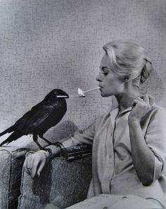 A  crow lights Tippi Hedren's cigarette. Promotional shot for Alfred Hitchcock's The Birds.   Via Retronaut