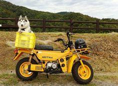 Honda Motra. Cute dog too
