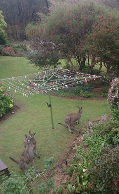 Australian Garden The Hills Hoist Washing Line - iconic in almost every back yard in Australia since the 1950's