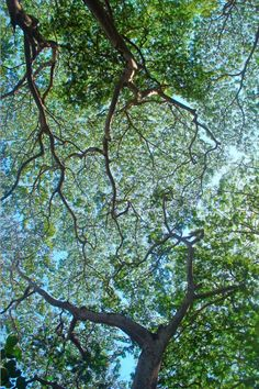 I take pictures like this often -- looking up into a tree.
