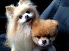 şirin yavru köpekler ile ilgili görsel sonucu
