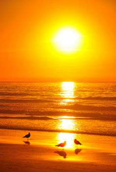 Gulls at Sunset - colorful - Sonne Sunset Pictures, Nature Pictures, Beautiful Pictures, Amazing Sunsets, Amazing Nature, Amazing Places, Beautiful Sunrise, Beautiful World, Nature Photography
