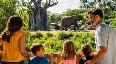 Get a closer look at the majestic African elephants at Disney's Animal Kingdom park—and learn what it takes to care for them.