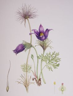 There's also more general information on painting, drawing and botanical art as well as a bit of science. Description from diannesutherland.blogspot.com. I searched for this on bing.com/images