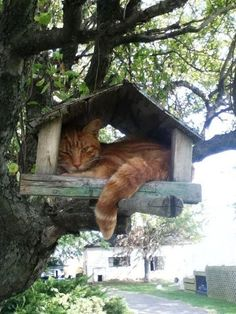 Cat in a Bird house