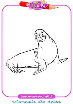Foka - Kolorowanki zwierzęta