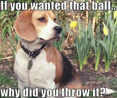 I always wonder if my boys are thinking this when I throw their ball/toy away from them...