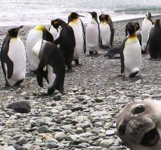 Seal photo bomb