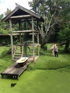 Louisiana Swamp http://www.realwildanimals.com