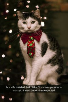 New funny cats christmas pictures 51 Ideas I Love Cats, Crazy Cats, Cute Cats, Funny Cats, Funny Animals, Cute Animals, Animals Images, Christmas Kitten, Christmas Animals