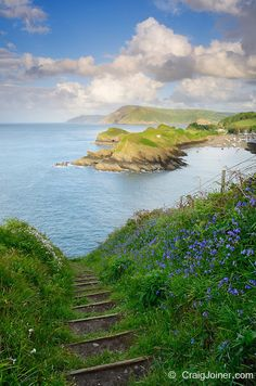 Spring flowers on Widmouth Head overlooking Sextons Burrow and Watermouth near Ilfracombe and Coombe Martin, Devon, England, United Kingdom.