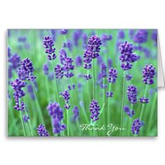 Purple Lavender Field, Thank You Cards