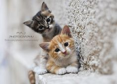 Two cats - M.A.J photography | Flickr - Photo Sharing!