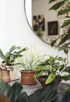 binnen en buiten versieren met planten / sfgirlbybay