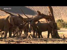 Les Eléphants Du Désert VF Complet (reportage emission TV film Documentaire) documentaire, vidéo, reportage, emission télévisé, video documentaire, documenta...