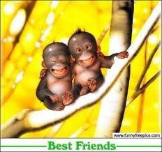 wow! look @ the orangutan it's so cute!