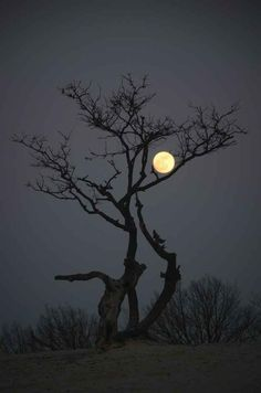 20. Lovely ! Feels like branch of tree is embracing the moon.