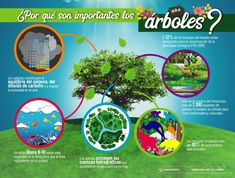 dia internacional del bosque infografia - Google Search Google Classroom, Forests, Trees, International Day Of, Amazons, Woods, Plants, Woodland Forest, Tree Structure
