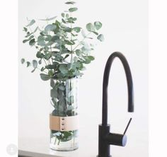 Staging, Fig, Pretty, Green, Instagram Posts, Laundry, Ideas, Kitchen, Role Play