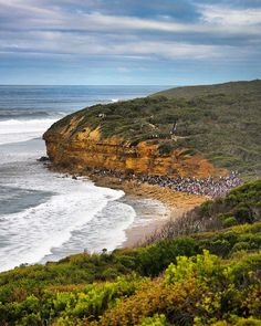 Bells Beach Surfing Classic Australia The centre of the surfing world is in Australia with the Bells Beach Surfing Classic.  This #beach is just unique an amazing natural amphitheatre facing some of the best waves on the planet. Do you need more? Oh yes it's on the Great Ocean Road ;) #australia #visitvictoria #greatoceanroad #bellsbeach #ripcurlpro #surfing #coast #traveling #travelphotography by stef_travelphotography