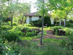 front yard with 3 rain gardens ... check thru for whole story (ground breaking in '07 to this picture, '12)