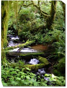 Forest Stream Outdoor Canvas Art