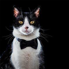 Gatos Malignos: El maravilloso trabajo fotográfico de Alfonso Herranz + Alicia para una campaña de adopción de gatos sin hogar