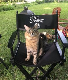 Stephen King's Pet Sematary Remake Had Cats From Shelters Who Were Trained To Become Cat Actors Mary Lambert, Pet Sematary, Scary Movies, Horror Movies, Funny Horror, Halloween Movies, King Picture, Steven King, Kittens