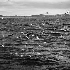 Iceland- la famiglia delle orche assassine