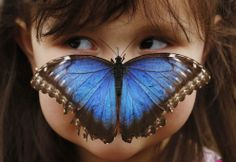 Stella Ferruzola, poses with a Blue Morpho butterfly on her nose at the Sensational Butterflies Exhibition at the Natural History Museum in London, on March (Reuters/Luke MacGregor) l The Year in Photos, - The Atlantic Blue Morpho, Morpho Bleu, Morpho Butterfly, Butterfly Effect, Butterfly Kisses, Blue Butterfly, Butterfly Pose, Butterfly Exhibit, Butterfly Photos