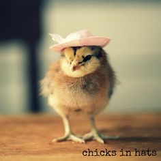 Magnet Chicks in Hats Chicken Wearing a Pink Floral Hat