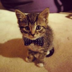He stole my tie!
