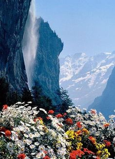 I did not realize there was a place on Earth that looked like this. Mountain Flowers at Waterfall Cliffs