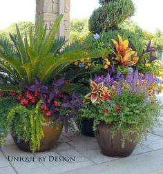 Beautiful container gardening ideas and plant names outdoor flowers, outdoor planters, garden planters, Container Flowers, Container Plants, Container Gardening, Succulent Containers, Outdoor Planters, Garden Planters, Outdoor Gardens, Patio Plants, Outdoor Decor