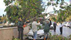 Devriye Haber : Fırtına, Kırklareli ve Çorlu'da Ağaçları Devirdi