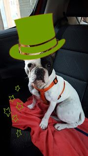 Hope the frenchie: St. Patrick day