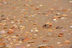 Recuerdos de arena y sol.  #photography #fotografia #beach #playa #conchas #shell #cangrejo #crab #nikond5200
