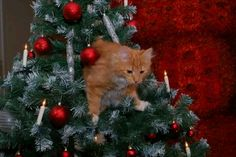 He is moving toward the naughty list :)