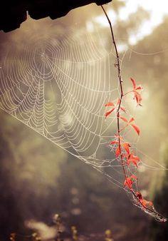 . SPIDER WEB!!           Фотография!
