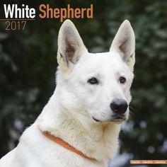 Avonside Hunde-Kalender 2017Avonside Hunde Wandkalender 2017: White Shepherd - Weißer Schäferhund