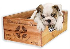 Pet bed made out of a wine crate