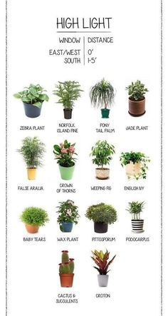 House Plants Heal House plants are good for you. It's true! There is a body of extensive research that shows how house plants assist in cleaning the air y The post House Plants Heal appeared first on Outdoor Ideas. Best Indoor Plants, Outdoor Plants, Indoor Window Plants, Indoor Plants Low Light, Indoor Trees, Decoration Plante, Inside Plants, Jade Plants, Green Plants