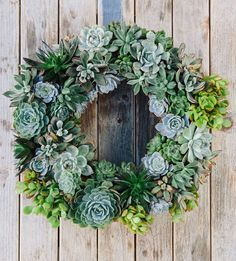Living Succulent Holiday Wreath...Mom, I want one.......