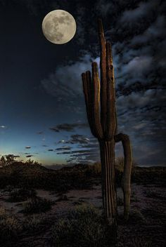 by the Light of the Moon ~ This is what we see all the time out here in the desert of Arizona! It is beautiful.....when it's not so HOT, that is!!  #GeorgeTupak