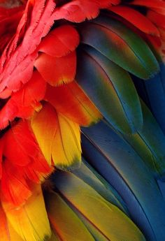 macaw / feathers