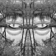 Reflection~♛