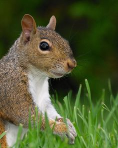 Photos like this really make me respect photographers. Ever try to photograph a squirrel??