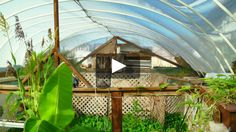 An Empty Swimming Pool Transformed Into an Urban Permaculture Farm Garden Pool, Garden Plants, Herb Garden, Old Country Houses, Homestead Living, Container Gardening, Vegetable Gardening, Permaculture, Hydroponics