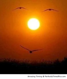 Sunset makes a great face – The wings of the birds and the sun make for an interest setting.
