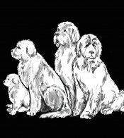 Newfoundland dog fabric and other products